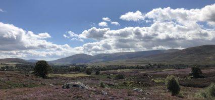The bonny view